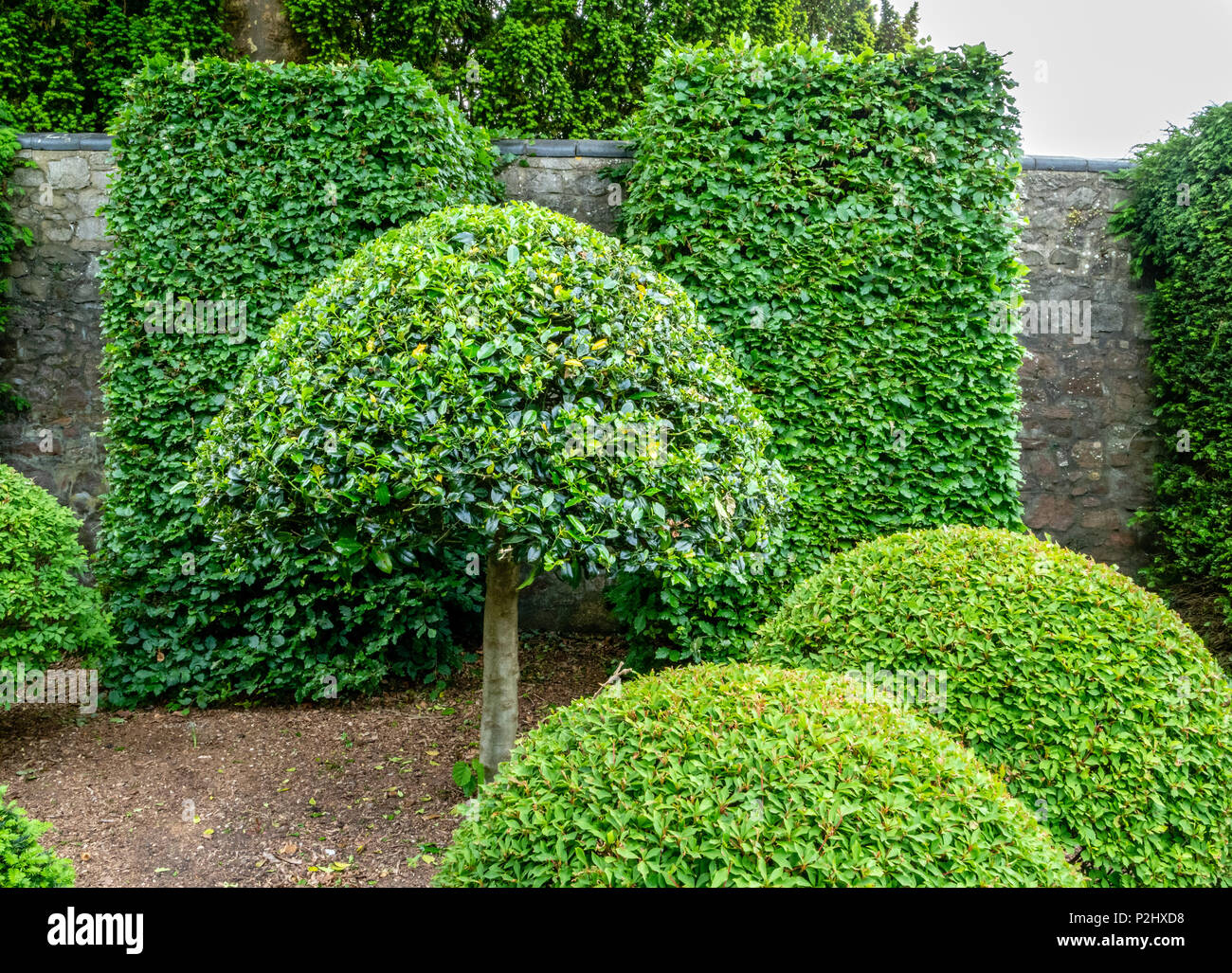 Clever use of sculptural topiary shapes in a domestic garden setting with clipped box and holly Stock Photo