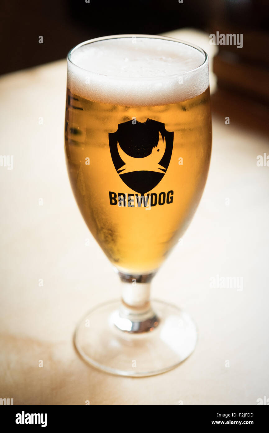 glass of Brewdog Punk IPA served in the DogTap, Ellon, Aberdeenshire, Scotland, UK - Stock Image