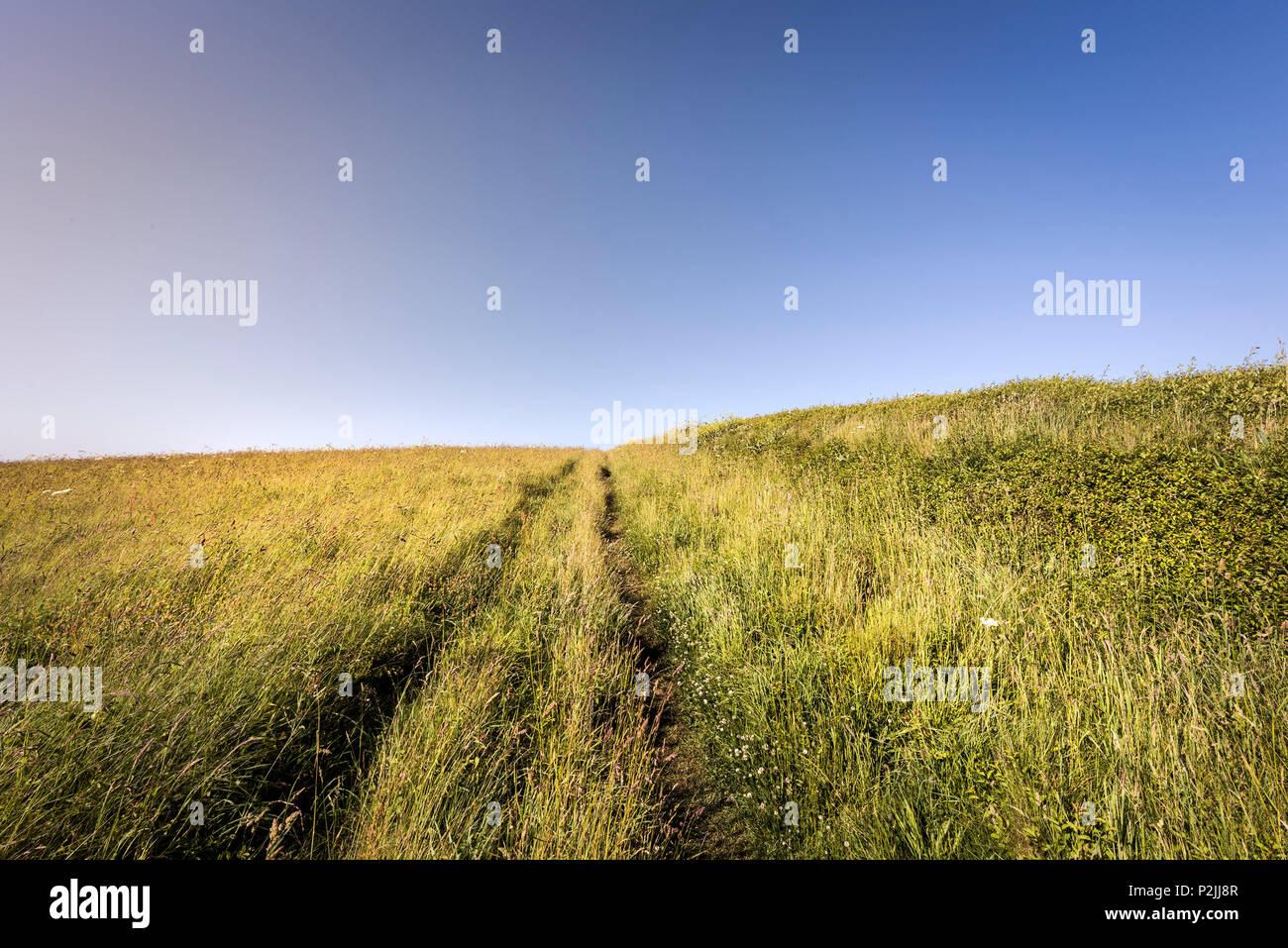 Tracks in a field in Cornwall. - Stock Image