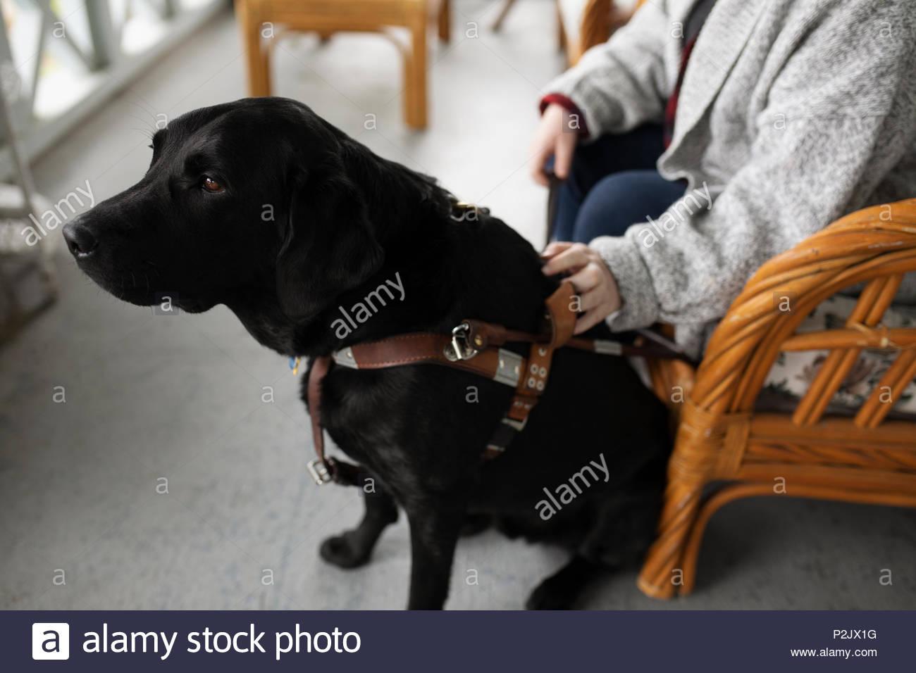 Woman with black seeing eye dog - Stock Image