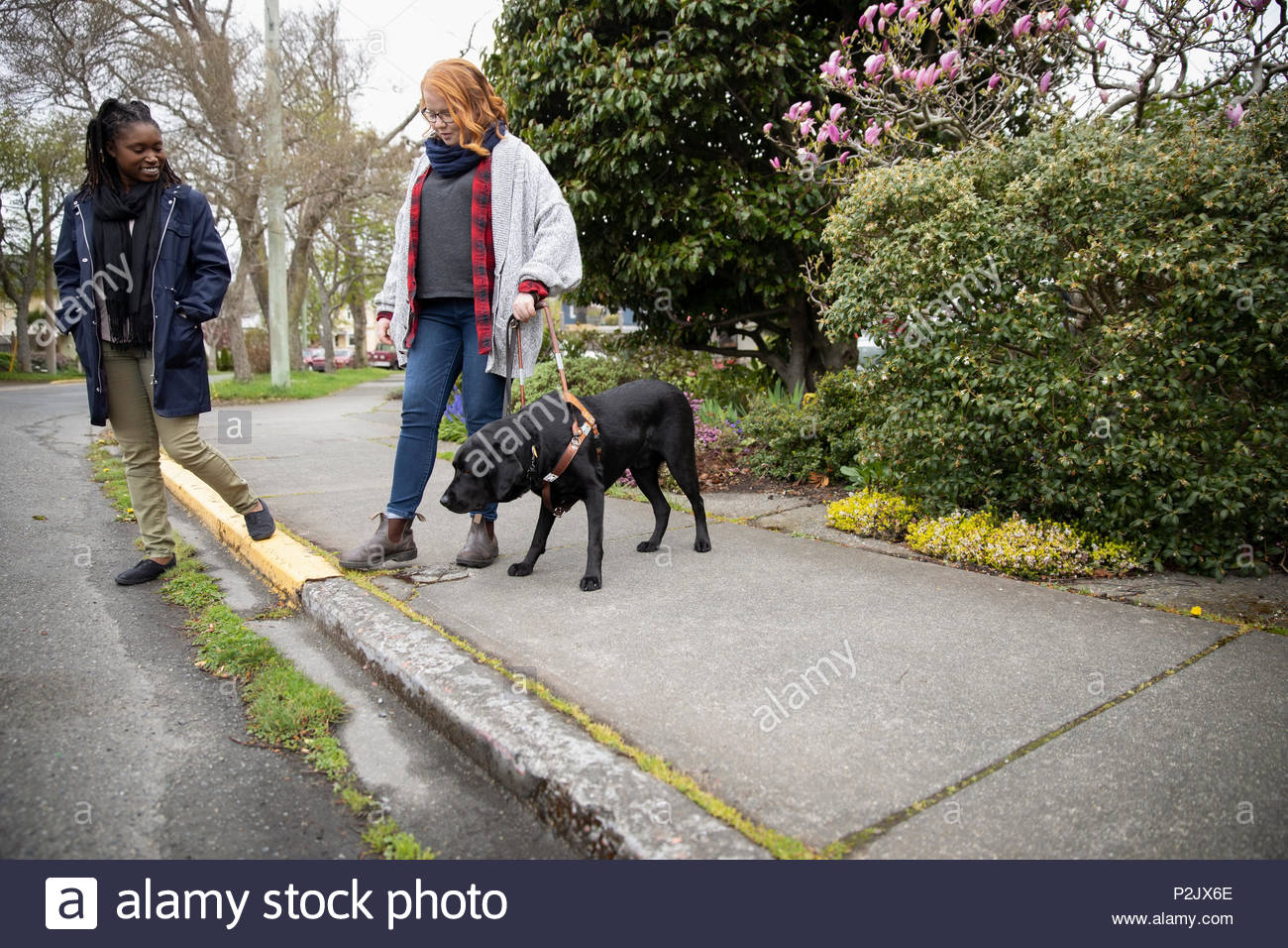 Visually impaired woman with seeing eye dog stepping off curb - Stock Image