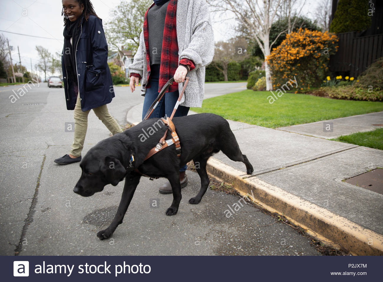 Seeing eye dog leading visually impaired woman walking in street - Stock Image