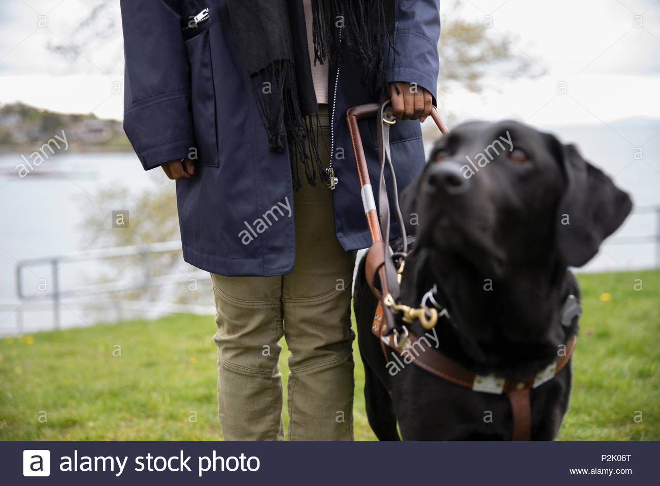 Black seeing eye dog leading visually impaired woman - Stock Image