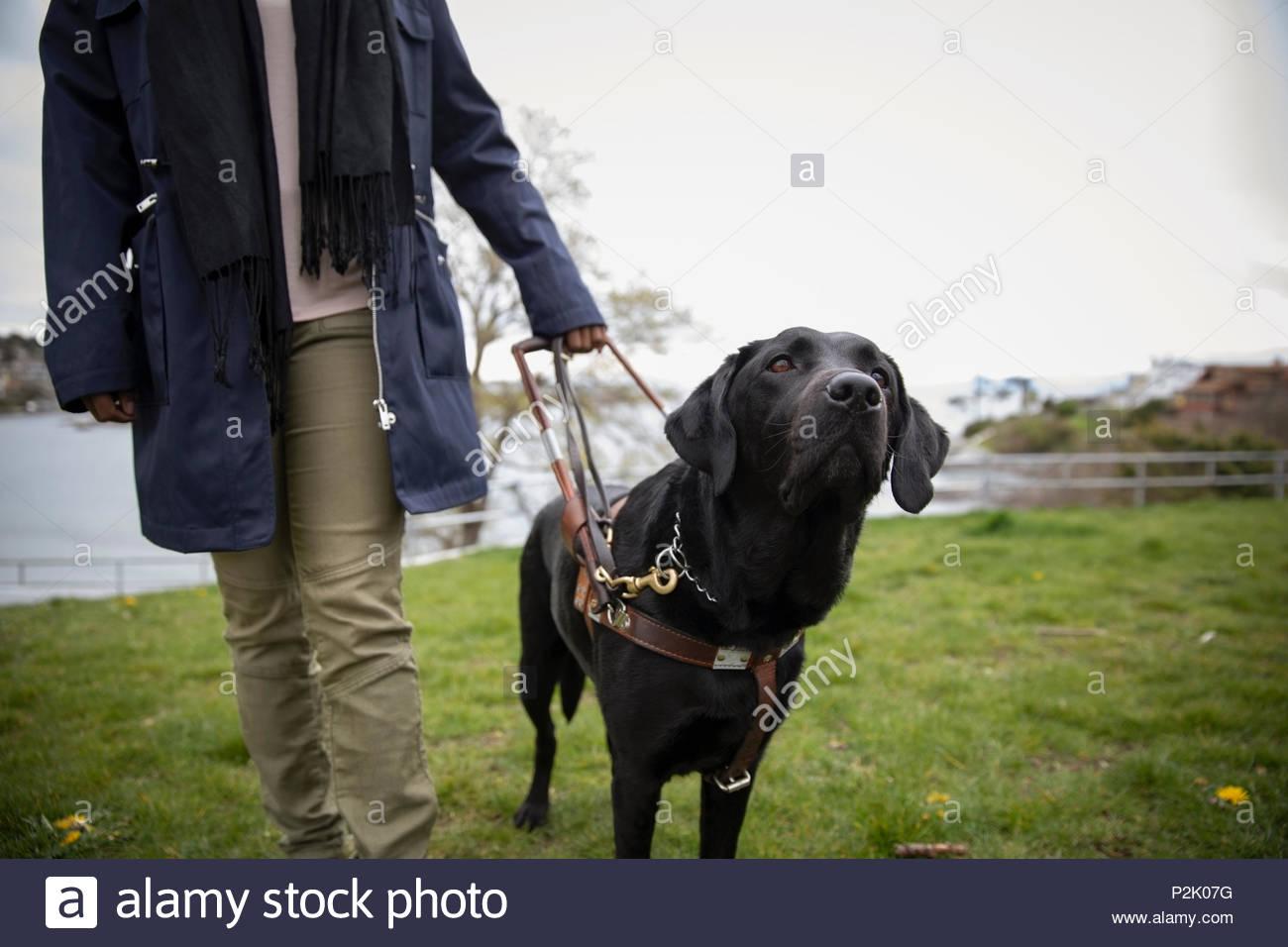Black seeing eye dog leading visually impaired woman - Stock Image