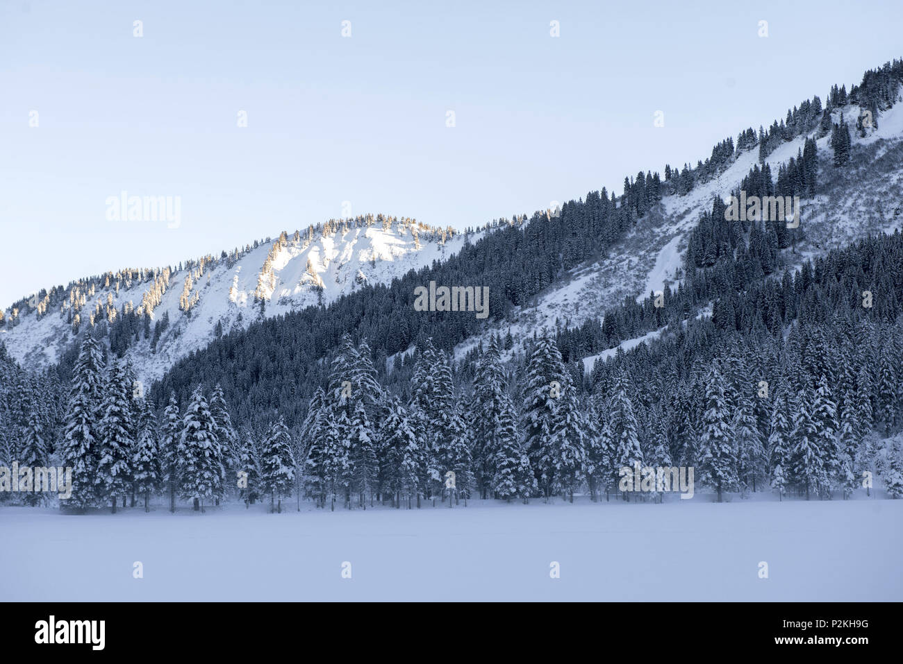 Winterly snowcovered landscape in the Kleinwalser valley in Vorarlberg just before sunset, Vorarlberg, Austria - Stock Image