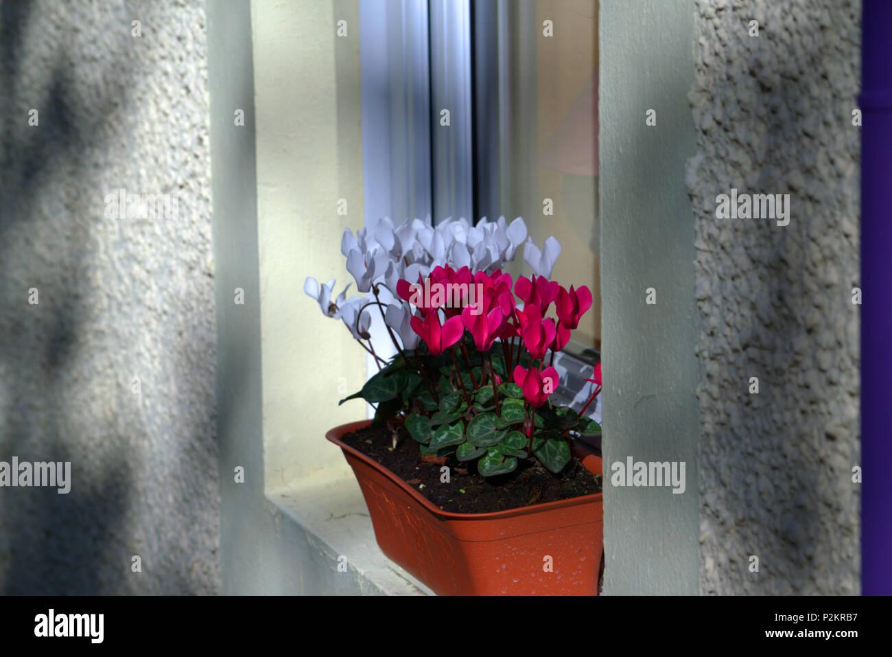 Window box - Stock Image