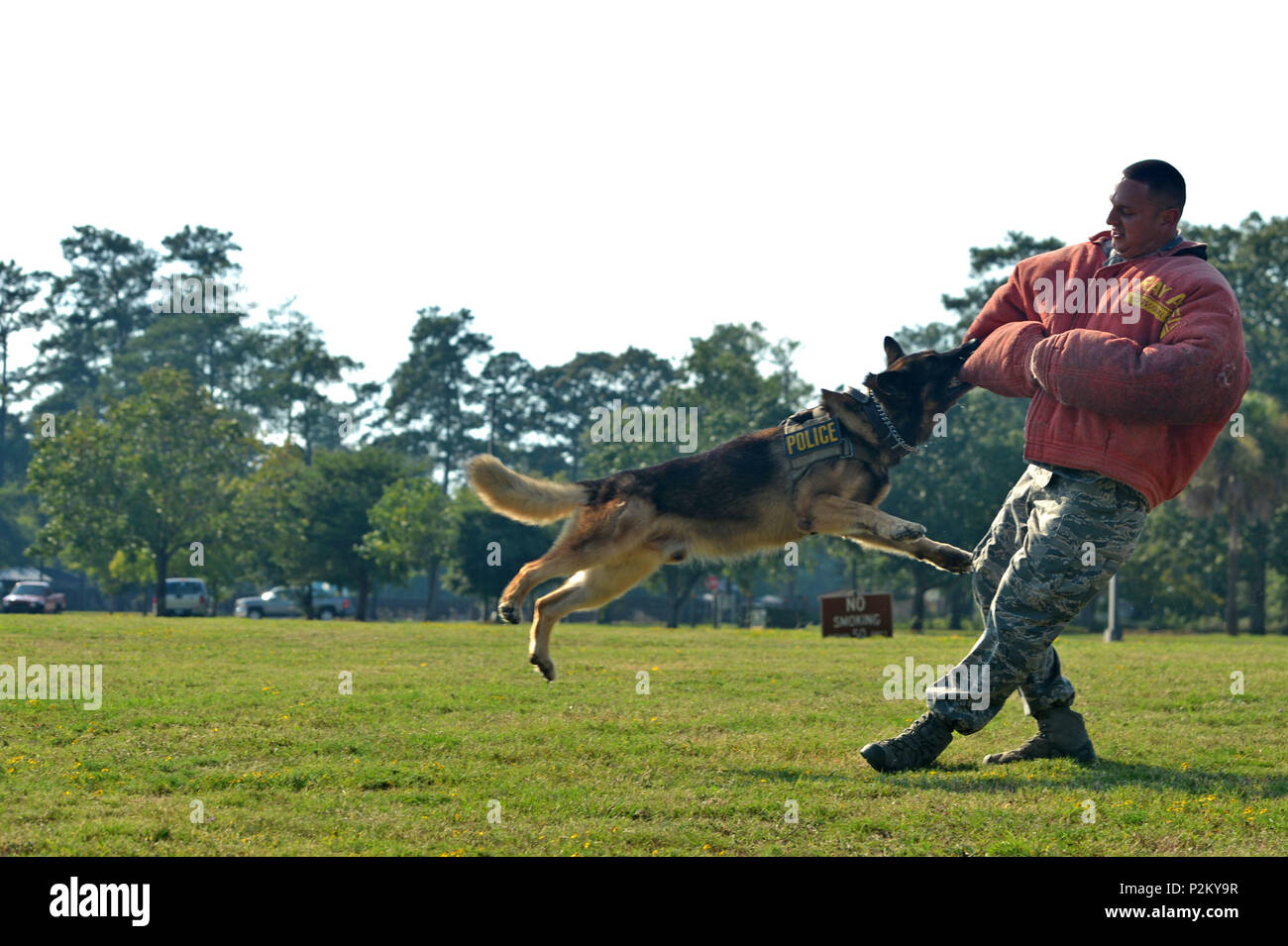 """U.S. Air Force Staff Sgt. David Mussio, 20th Security Forces Squadron military working dog handler, performs a MWD demonstration during a """"Defender for a Day"""" event at Shaw Air Force Base, S.C., Sept. 9, 2016. Airmen assigned to the 20th SFS showcased their duties for Jake Pritchard, 20th SFS honorary defender, and his family. (U.S. Air Force photo by Airman 1st Class Christopher Maldonado) - Stock Image"""