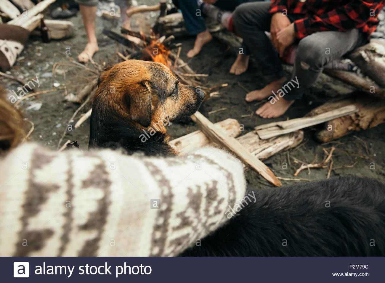 Woman petting dog at campfire - Stock Image