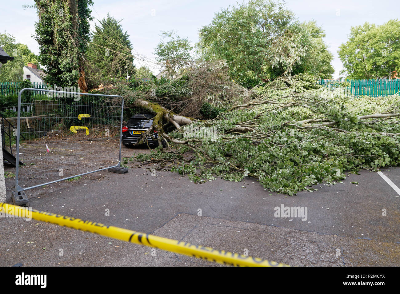 Pictured: The Mercedes GLA220 car which has been crushed by a tree in Cardiff, Wales, UK. Friday 15 June 2018 Re: A large tree has fallen and crushed  Stock Photo