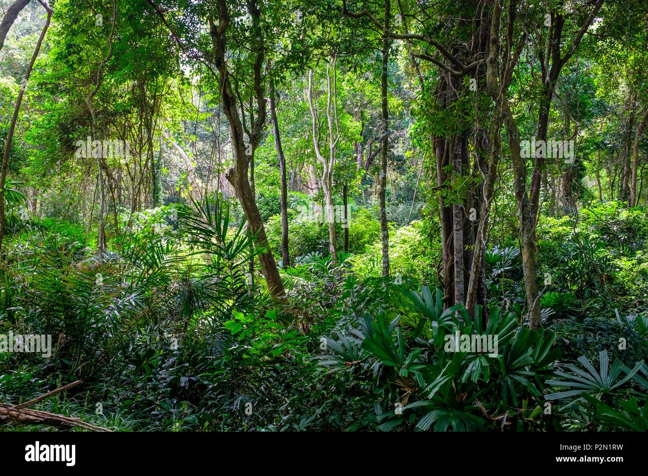 Thailand, Trang province, Ko Libong island, forest behind Tung Yaka beach west side of the island - Stock Image