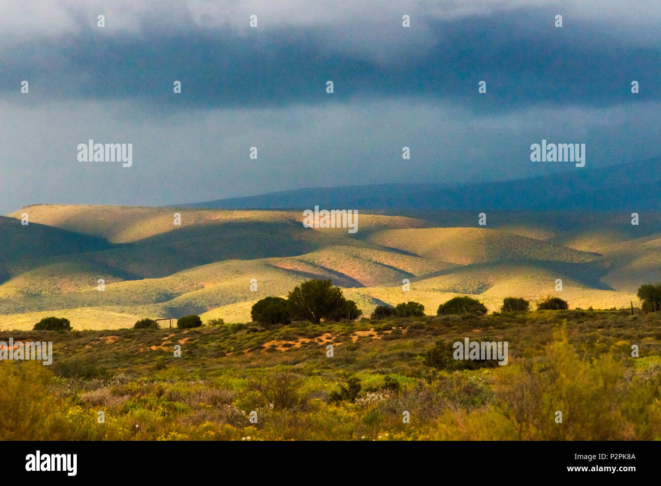 Bush land with mountain, Western Cape Province, South Africa - Stock Image