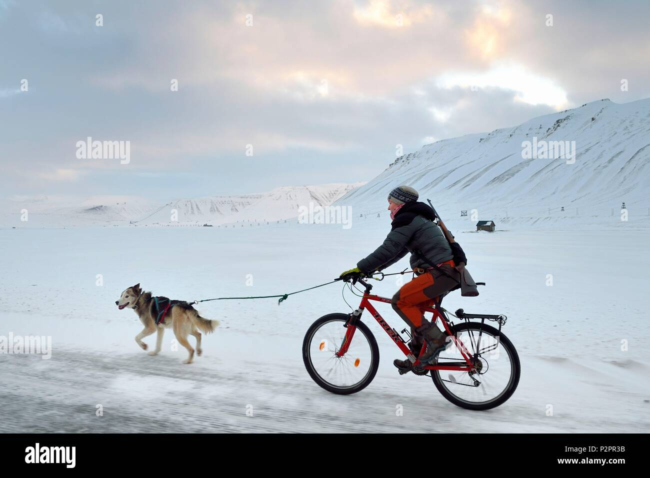Norway, Svalbard, Spitzbergen, Adventdalen valley near Longyearbyen, dog walk riding a bicycle with a rifle to guard against the possible danger of polar bears - Stock Image