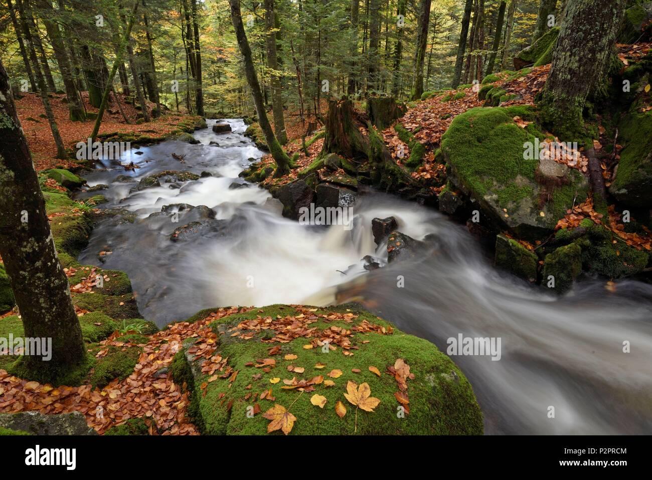 France, Territoire de Belfort, Ballon d Alsace, forest, La Savoureuse river, Rummel waterfall - Stock Image