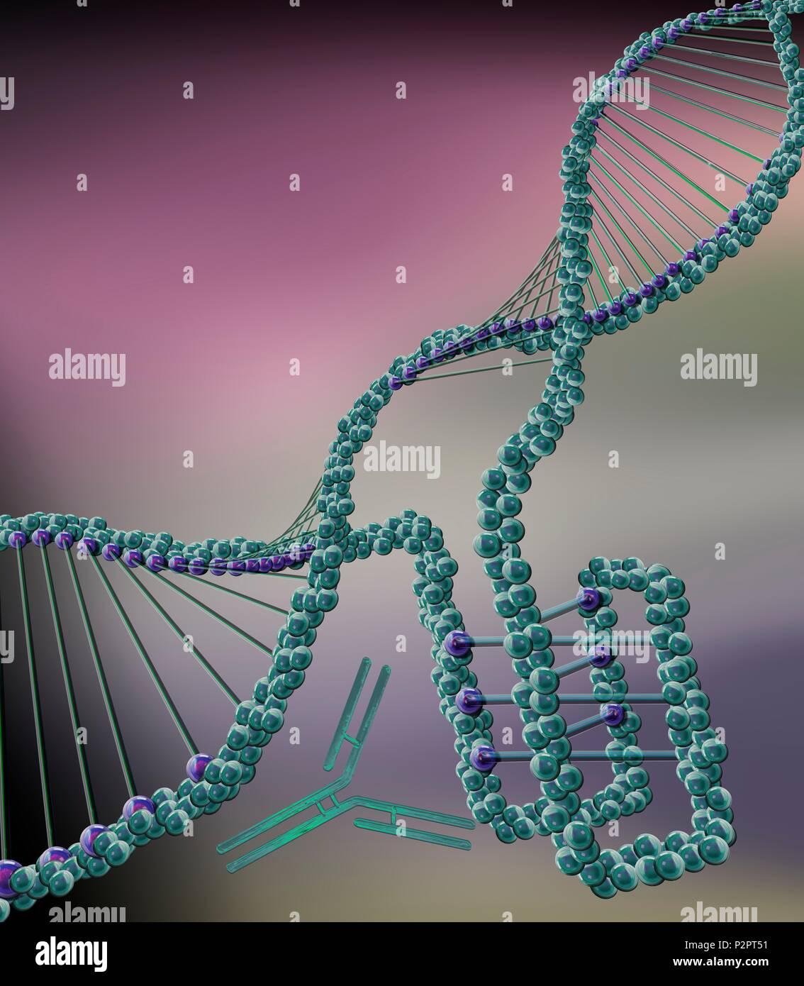 dna nucleotide ba self reliance - HD893×1024