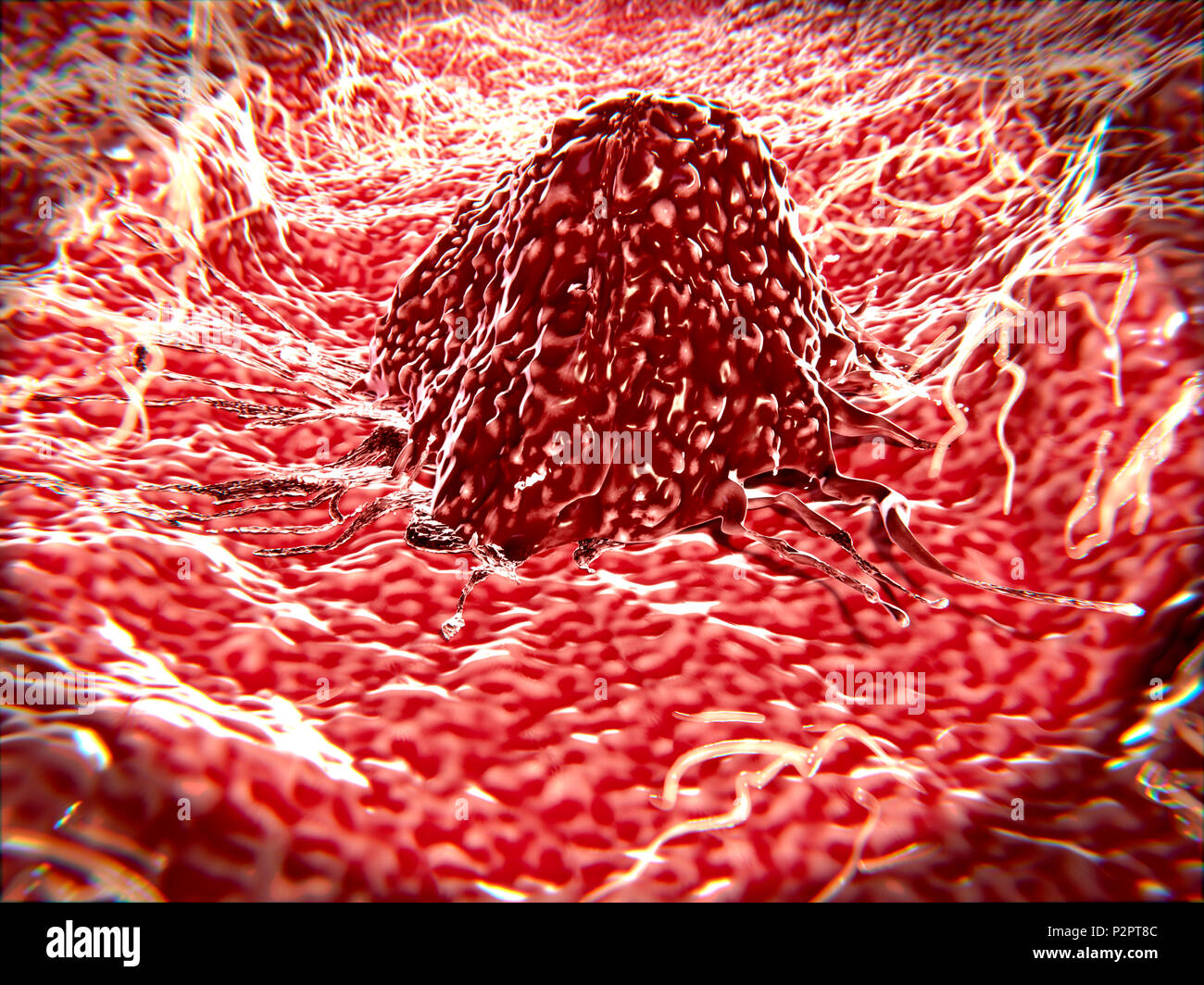 Lymphatic Cells Stock Photos Lymphatic Cells Stock Images Alamy