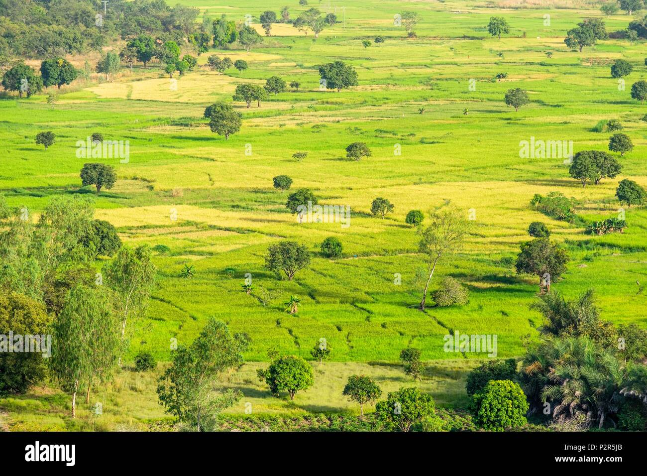 Burkina Faso, Cascades region, Sindou, country of the Senoufo ethnic group, panoramic view over sugar canne fields from the Sindou peaks - Stock Image