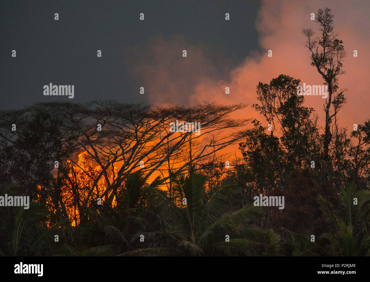 Pahoa, Hawaii, USA. 9th June, 2018. Fissure #8 blasts nearly 250 feet in the air clearing the tree line in Leilani Estates as the Kilauea Volcano lower east rift zone continues its eruption on Wednesday, June 6, 2018, in Pahoa, Hawaii. Credit: L.E. Baskow/ZUMA Wire/Alamy Live News - Stock Image