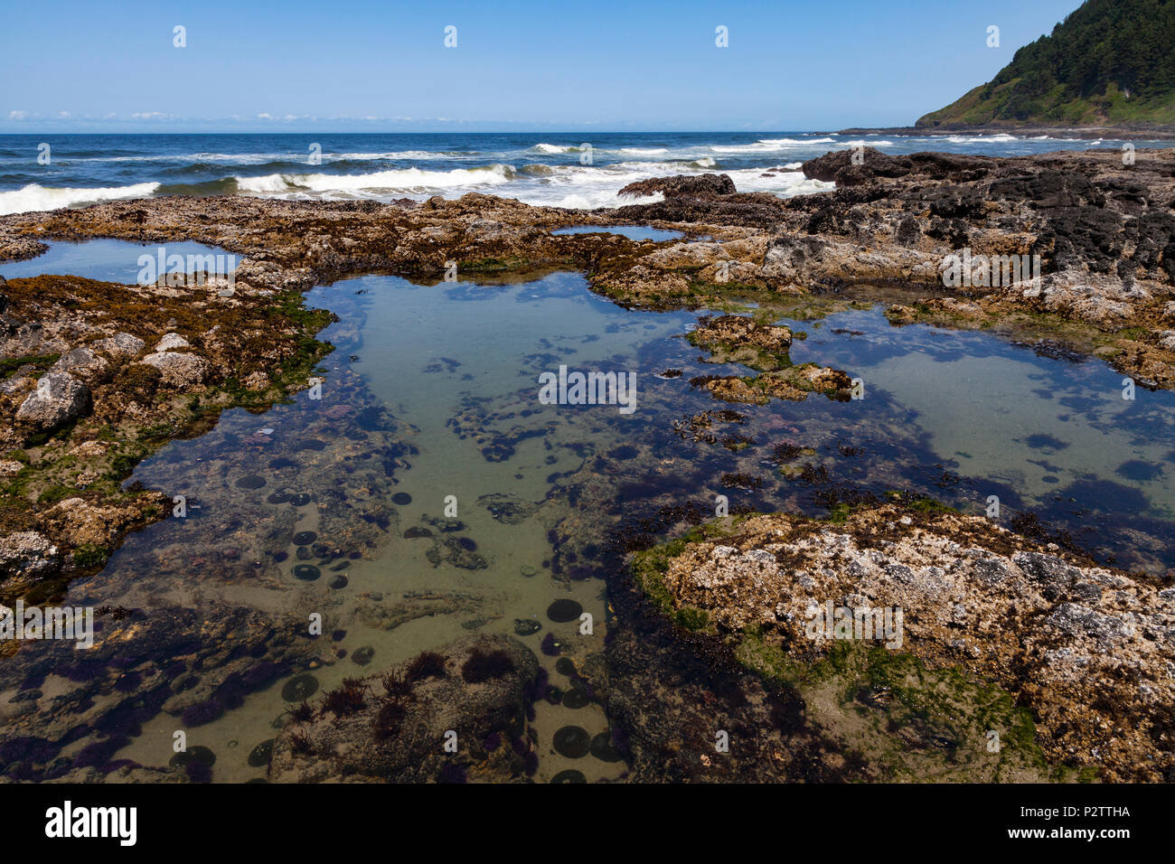 Low tide exposes the tidepools on the rugged lava flows at Cape Perpetua Scenic Area along Oregon's Central Coast south of Yachats. - Stock Image