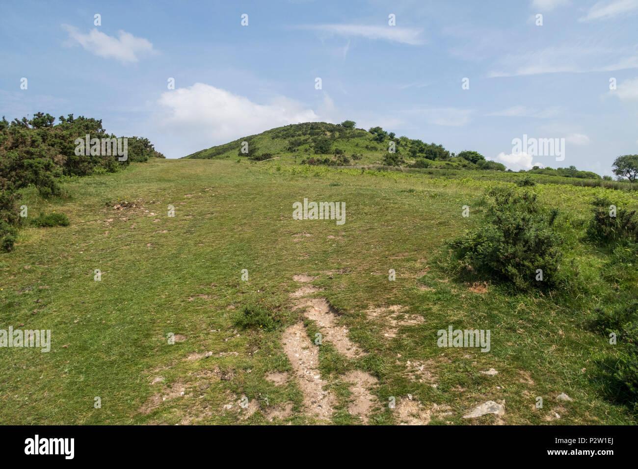 Pilsdon Pen, an iron age multivallate Durotrigian hill fort in the Marshwood Vale, Dorset. - Stock Image