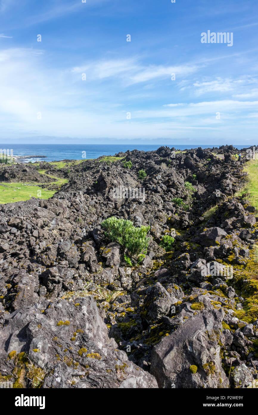 Lava field with vegetation, Tristan da Cunha, British Overseas Territories, South Atlantic Ocean - Stock Image