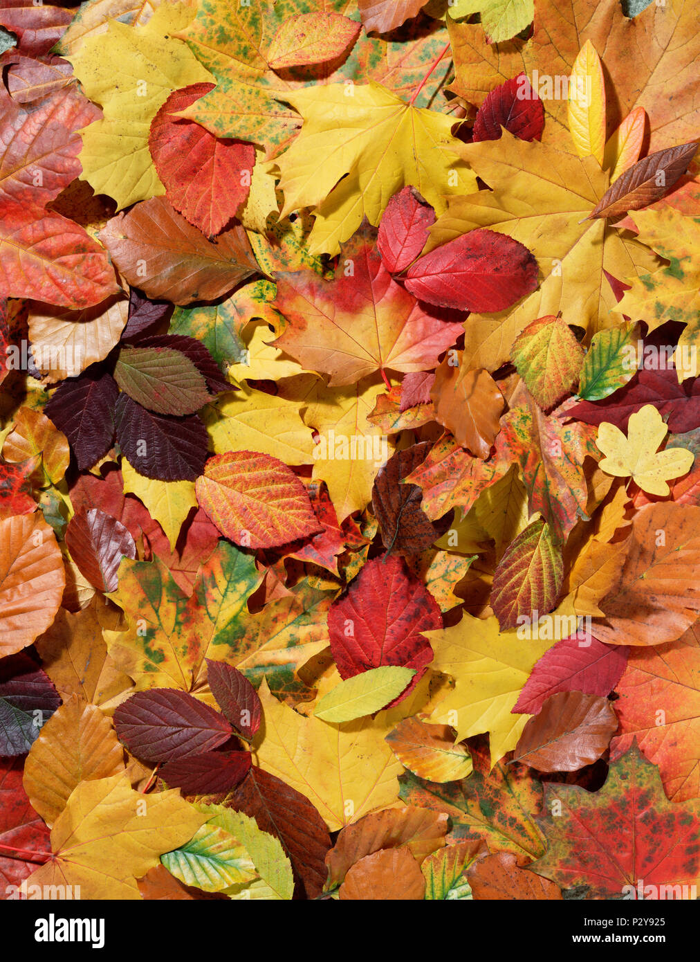 Close Up Of Autumn Fall Leaves Forest Floor Stock Photo Alamy