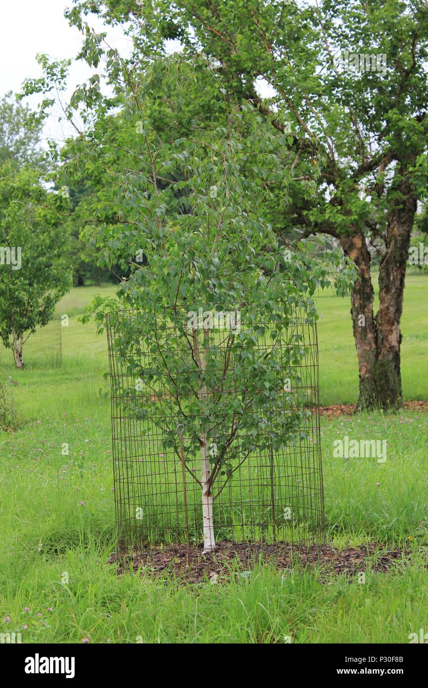 Tree nursery and plant conservation at the Morton Arboretum in Lisle, Illinois. - Stock Image