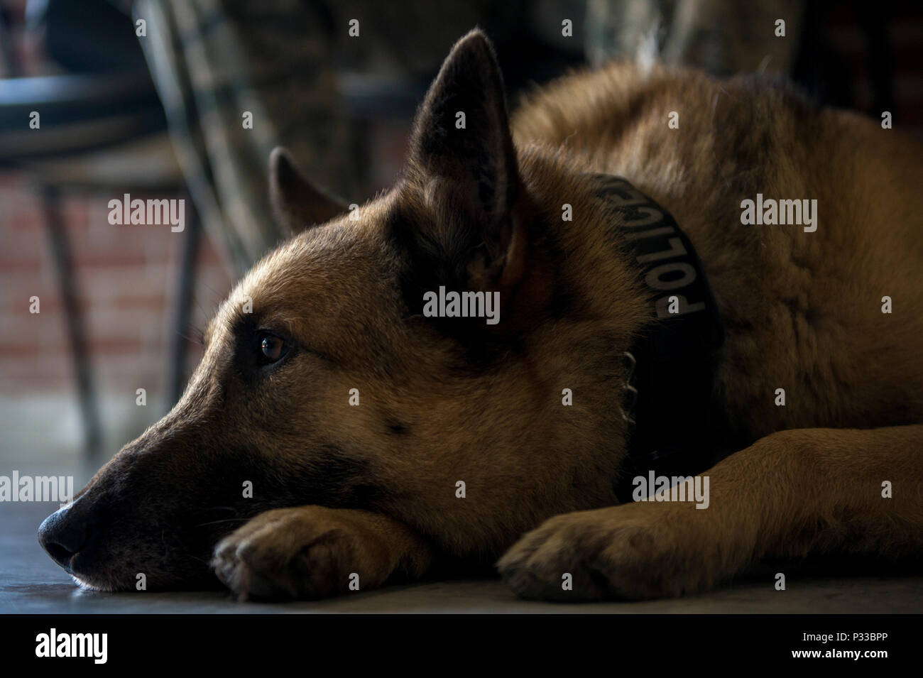 Military Working Dog Handlers 1st Stock Photos & Military