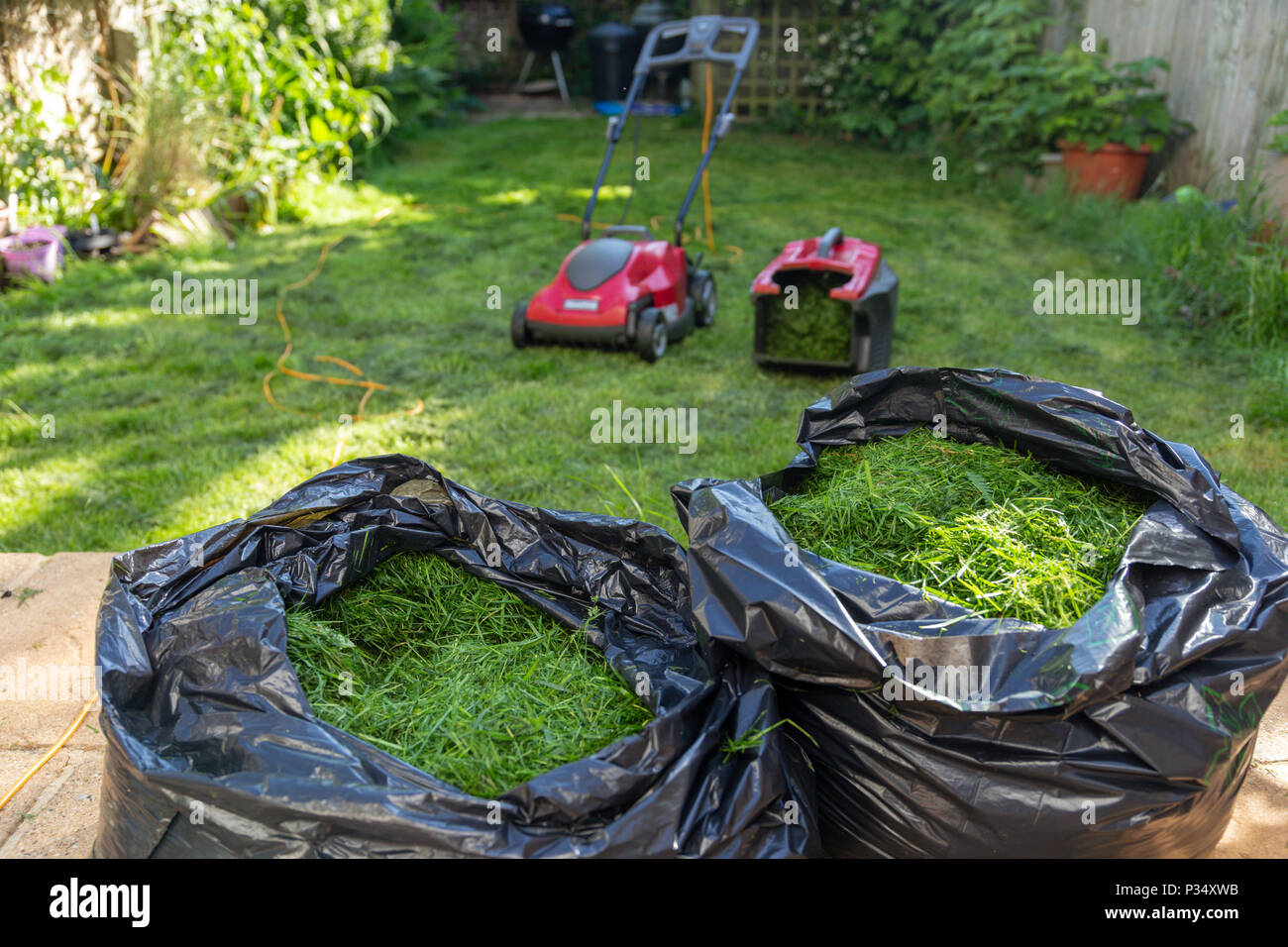 Mowing a household garden lawn with black bag of grass clippings - Stock Image
