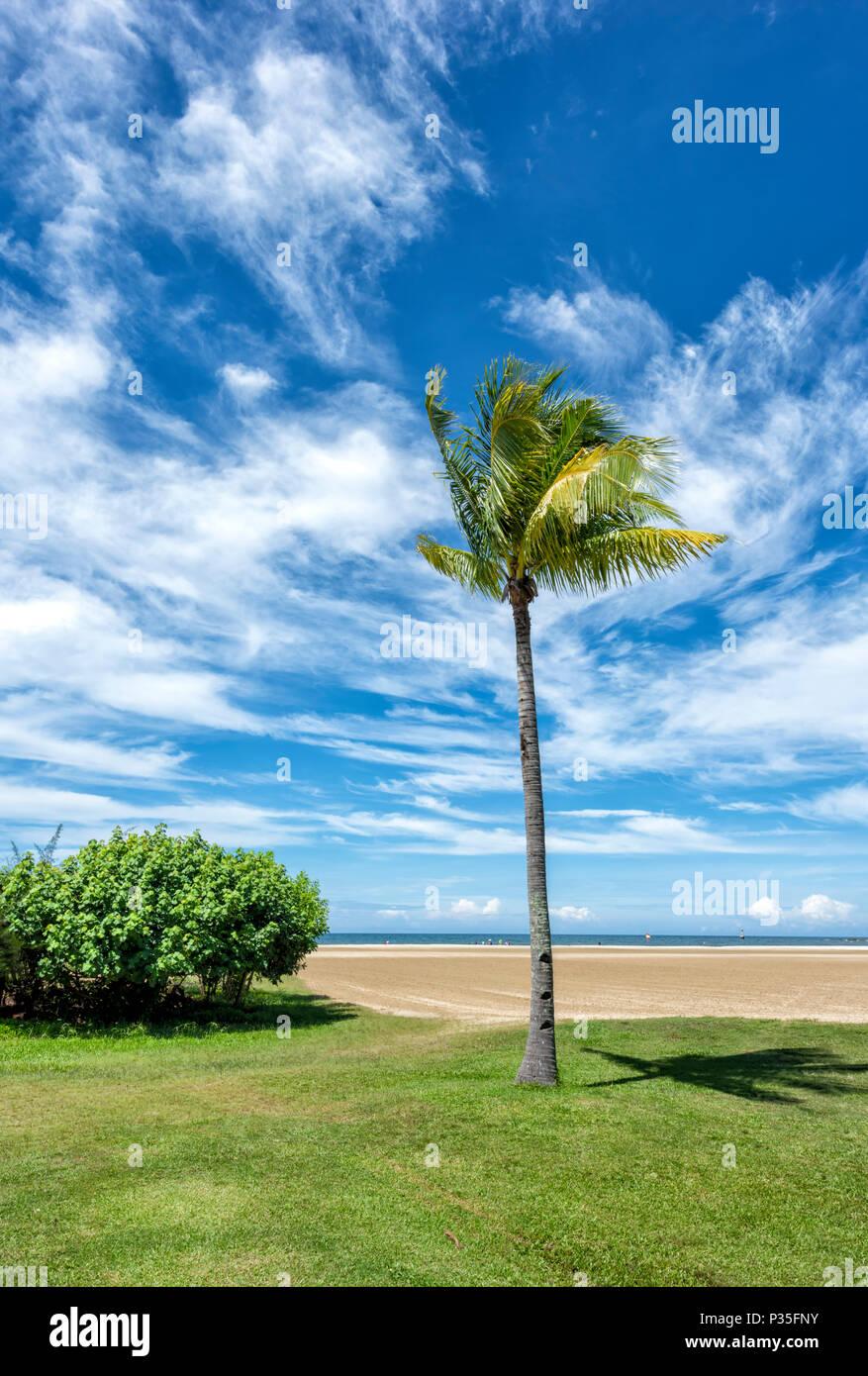 Solitary Palm Tree on the beach at Kota Kinabalu, Borneo, Malaysia - Stock Image