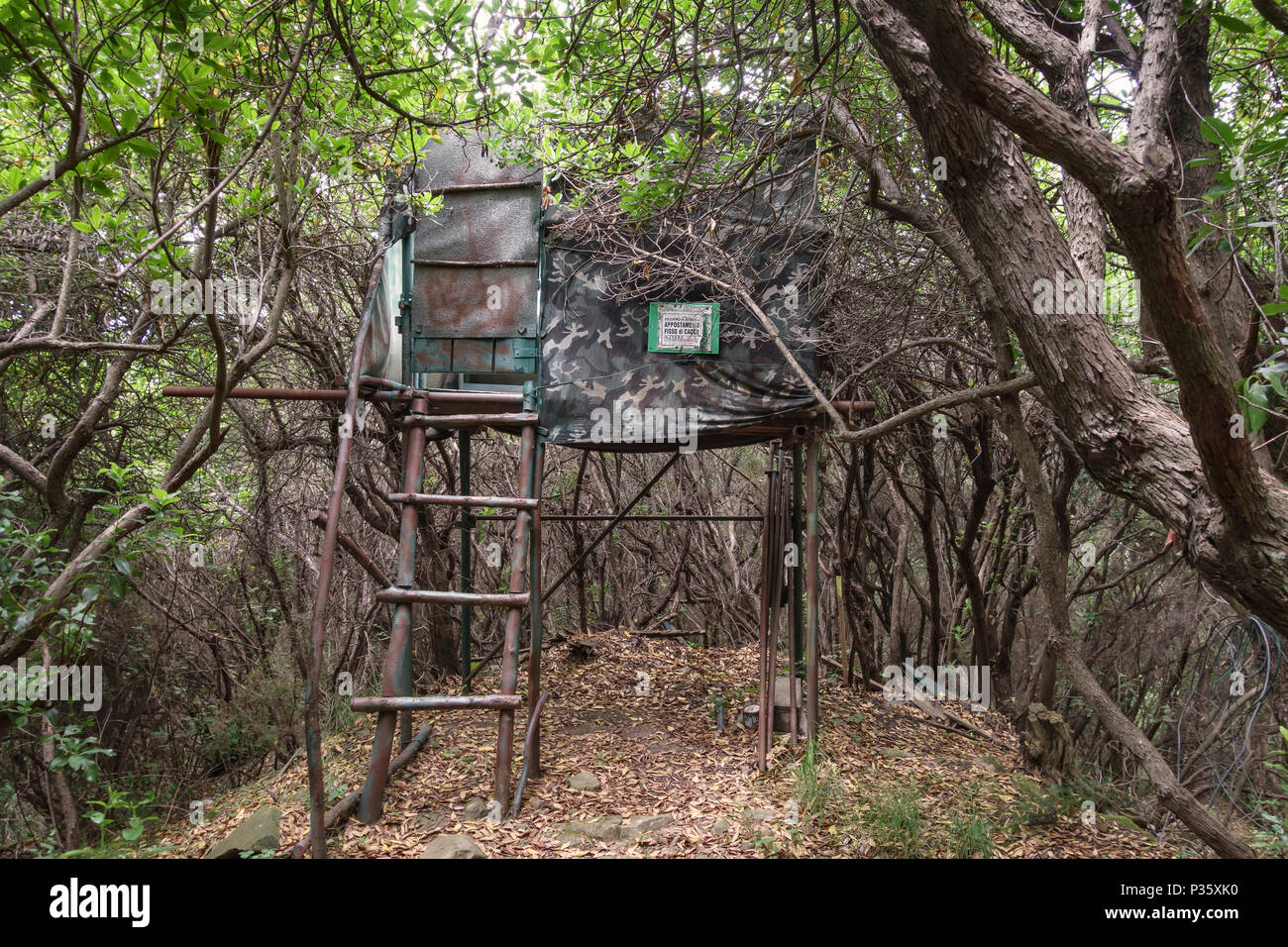 Tuscany, Italy. A shooting platform (appostamento fisso di caccia) in woodland. These woods are filled with wild boar (cinghiale) and also deer - Stock Image