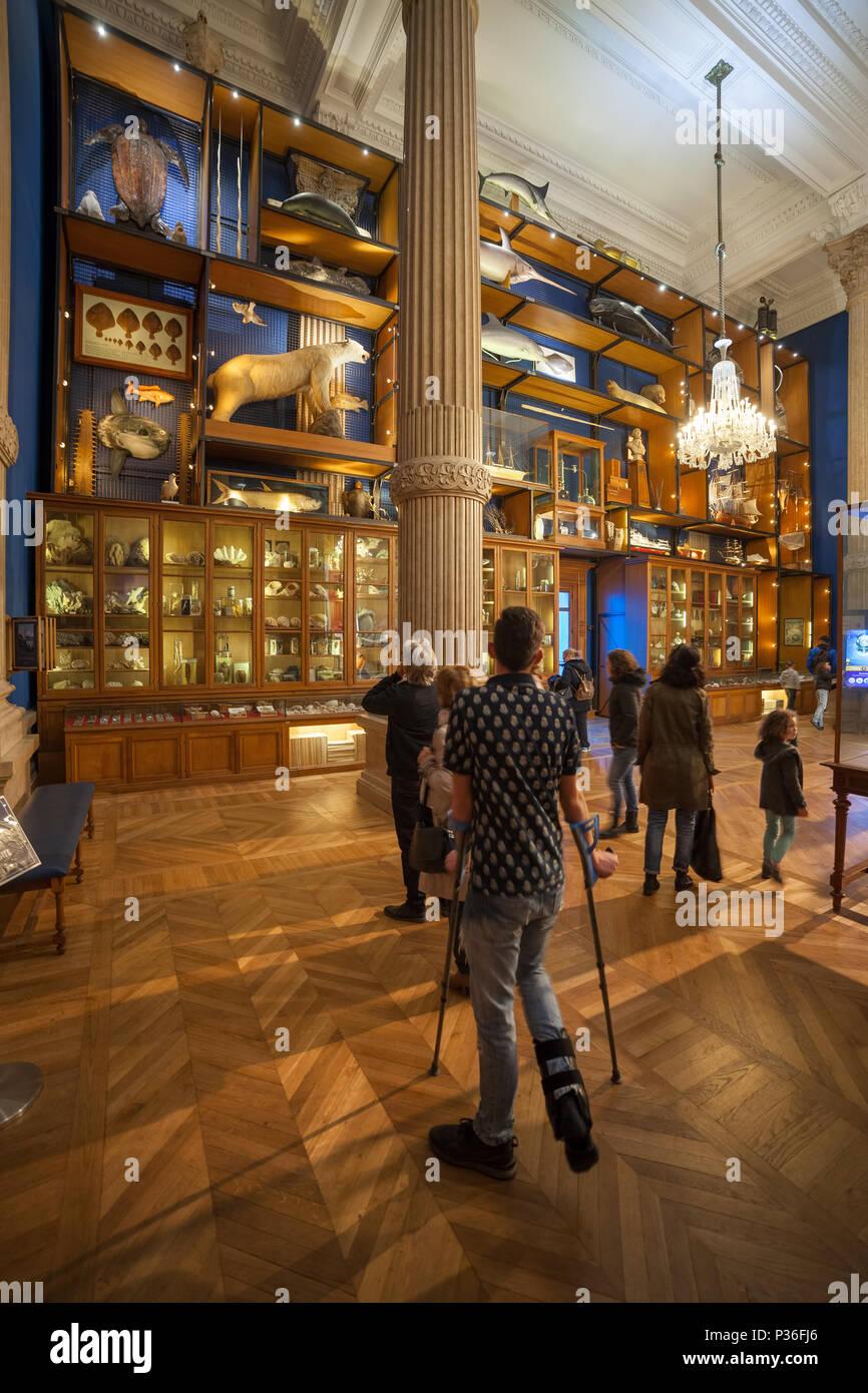 Monaco, cabinet of curiosities in Oceanographic Museum (Musee oceanographique) of marine sciences - Stock Image