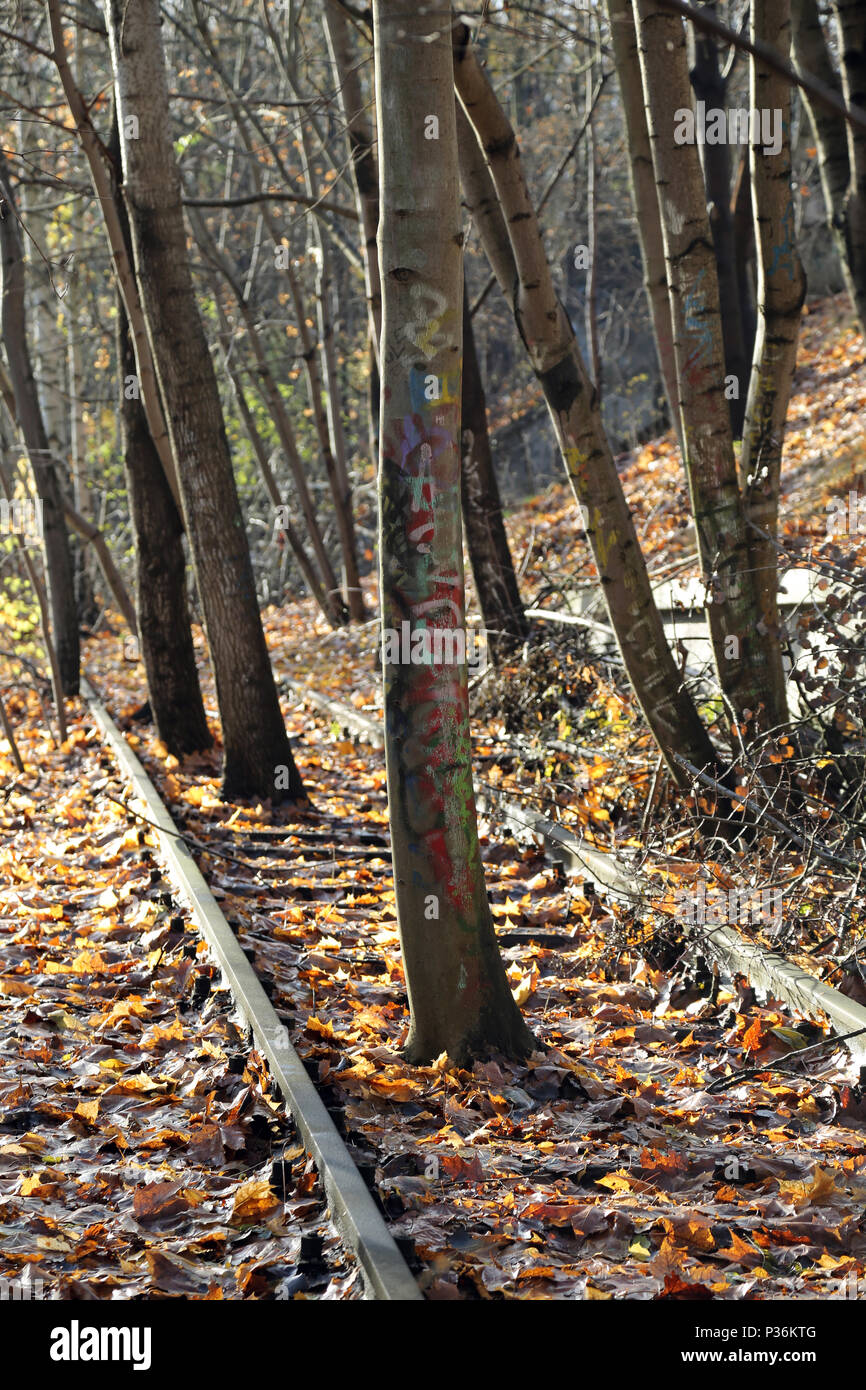 Berlin, Germany, trees grow in a derailed track bed - Stock Image
