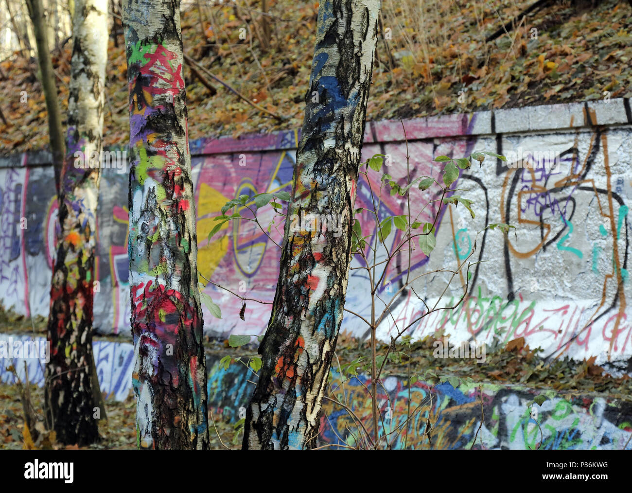 Berlin, Germany, colorfully painted birches in the Natur-Park Suedgelaende - Stock Image