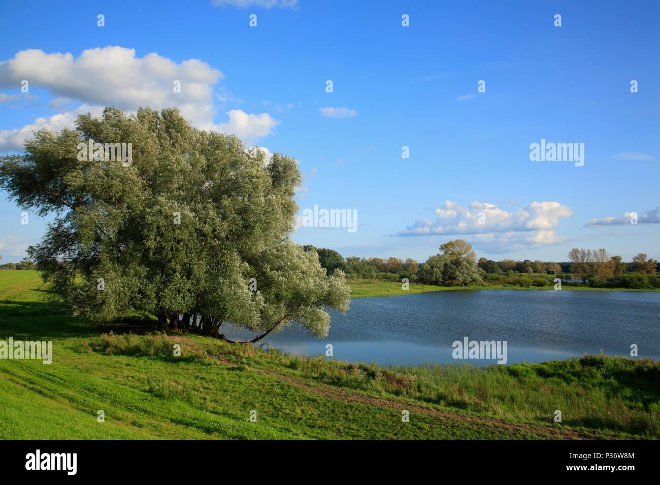 River Elbe, Stiepelsee, Amt Neuhaus, Lower Saxony, Germany - Stock Image