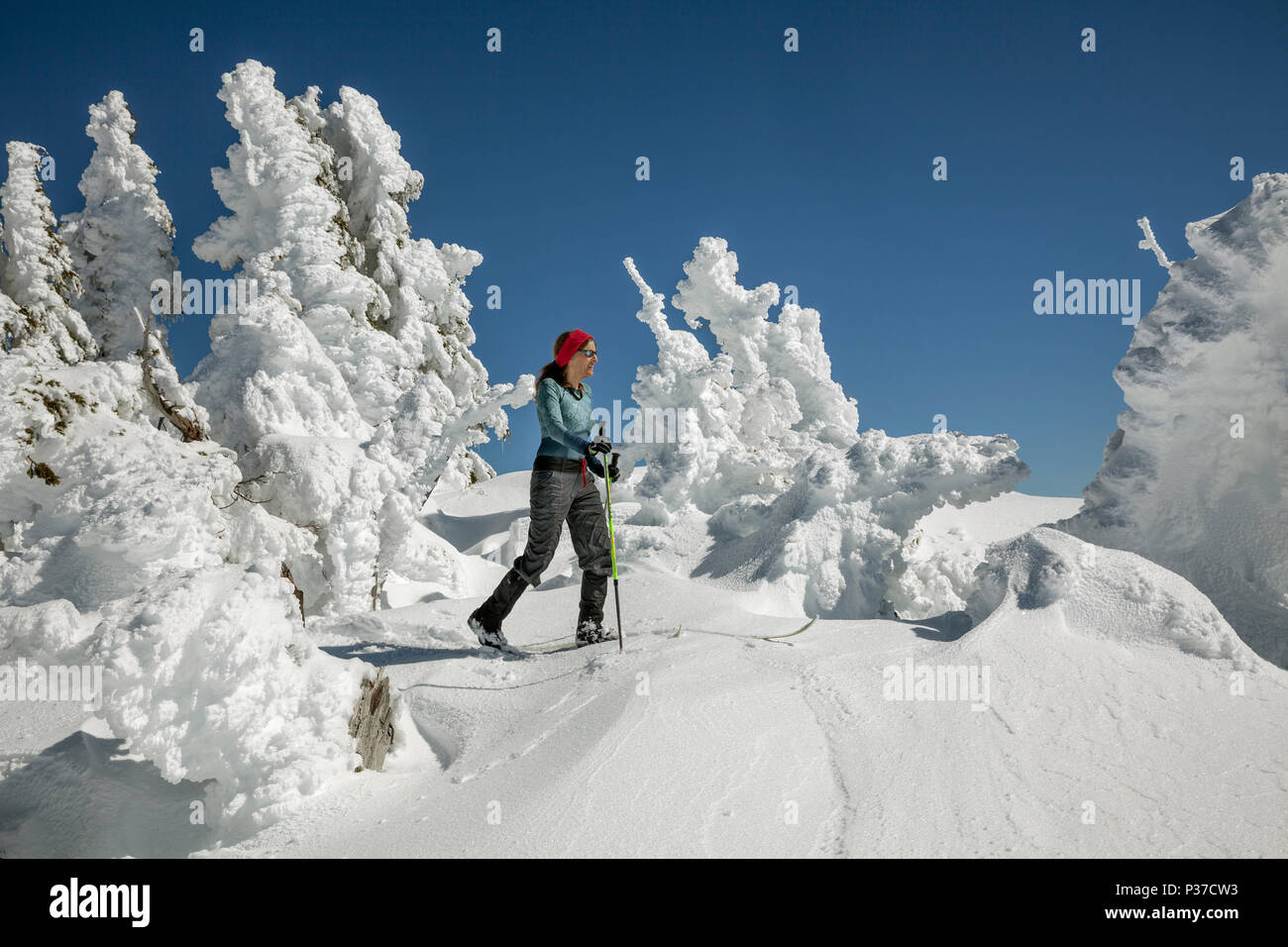 OR02511-00...OREGON - Vicky Spring skiing past snow plastered trees below the Watchman along the Rim Drive in Crater Lake National Park. (MR# S1) - Stock Image