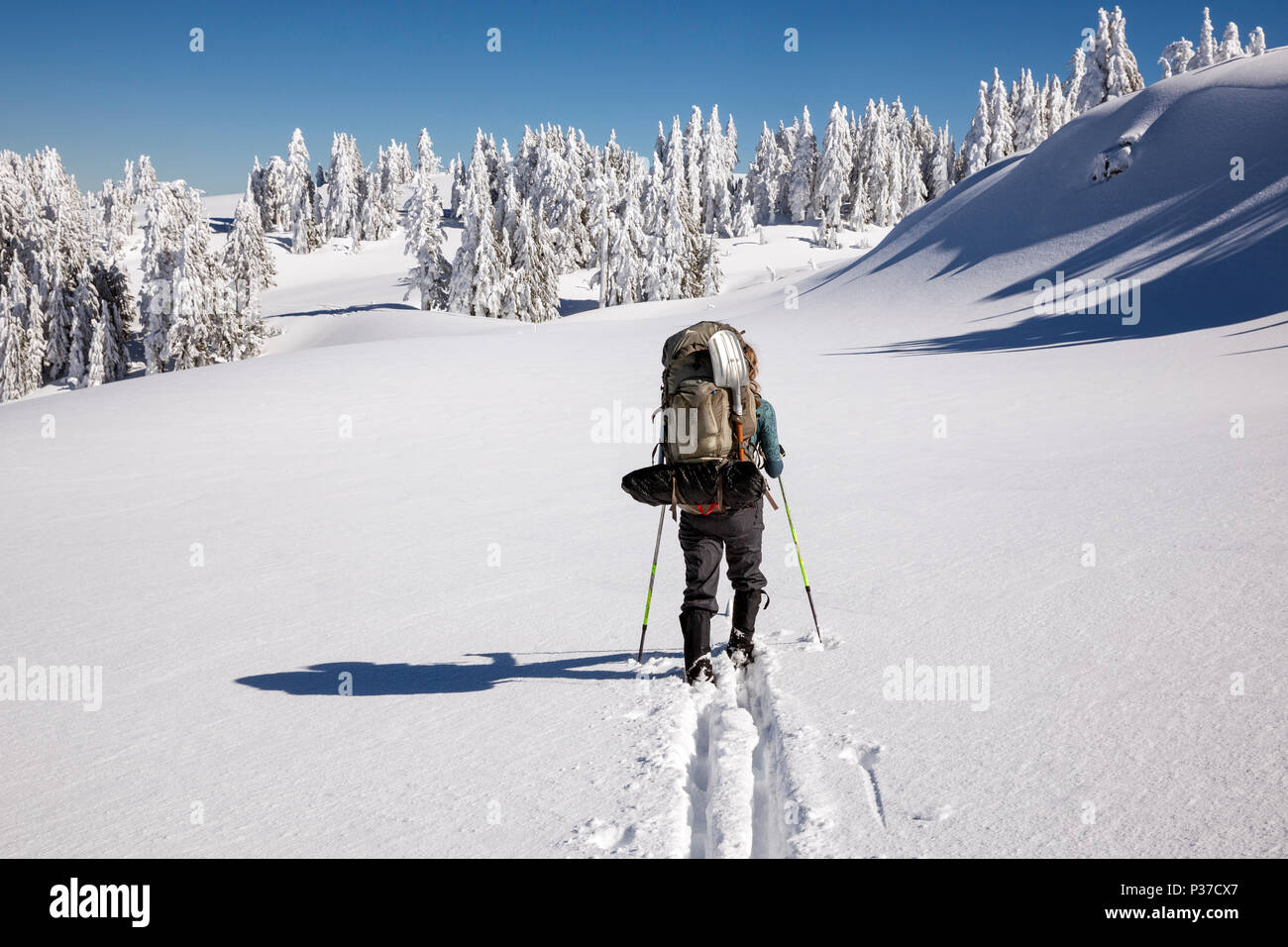 OR02515-00...OREGON - Vicky Spring skiing around Crater Lake on the Rim Road near North Junction in Crater Lake National Park. (MR# S1) - Stock Image