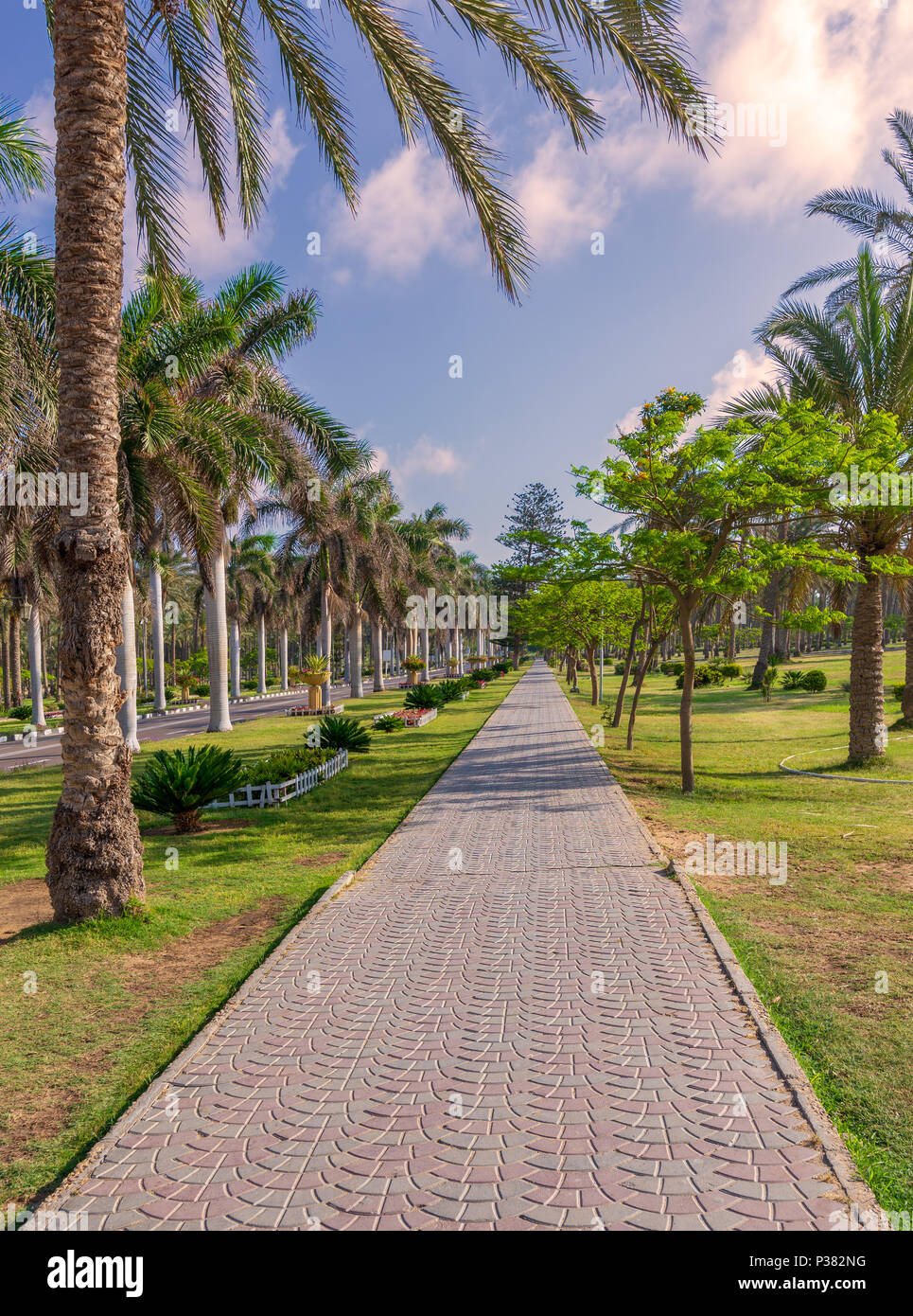 Pedestrian walkway framed with trees and palm trees on both sides with partly cloudy sky in a summer day, Montaza public park, Alexandria, Egypt - Stock Image