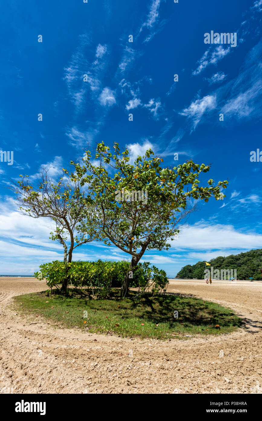 Clump of trees and a patch of grass on the beach at Kota Kinabalu, Borneo, Malaysia - Stock Image