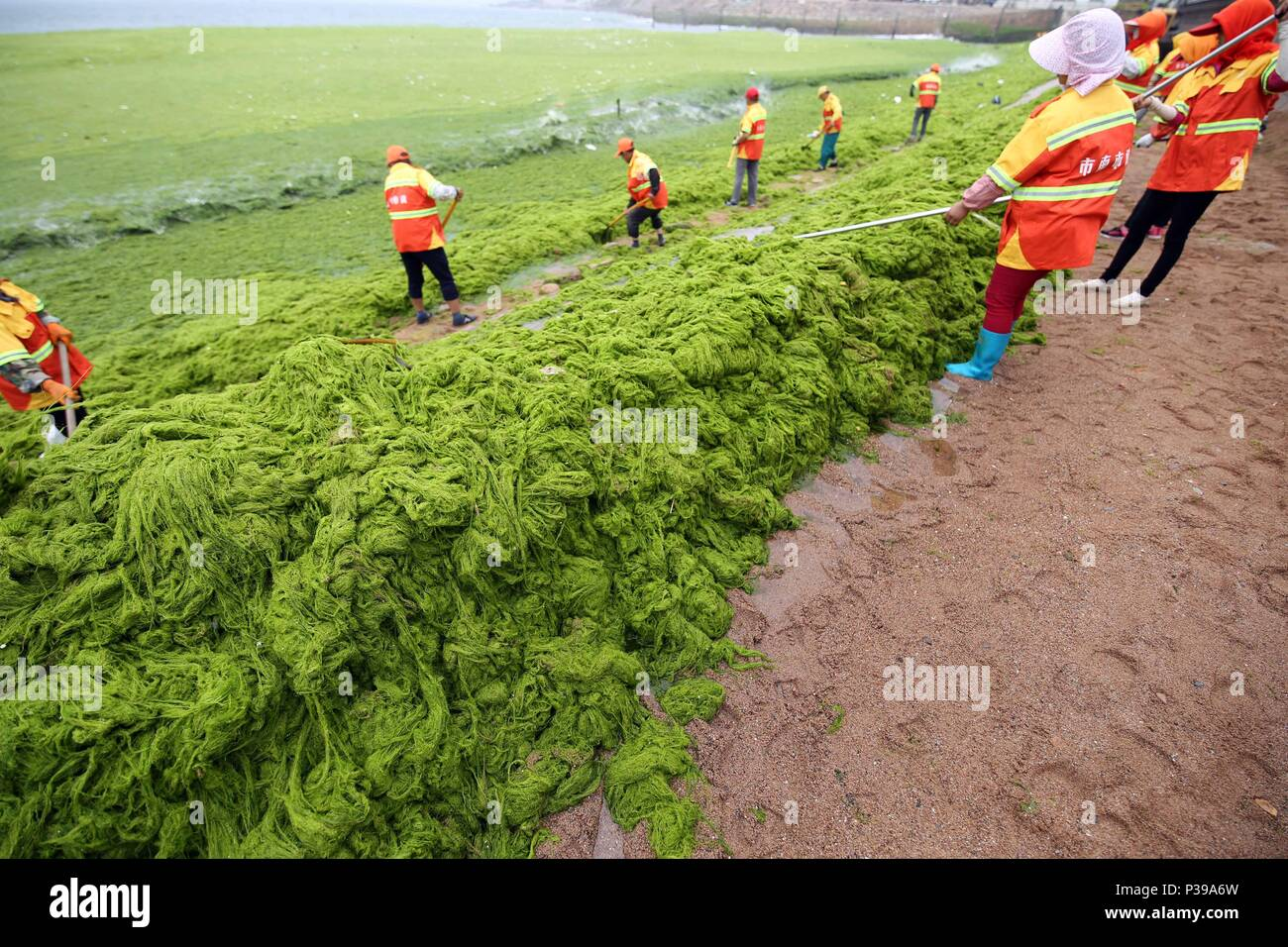 Qingdao, China's Shandong Province. 18th June, 2018. Workers clean up sea lettuces that spread along the coastline at Tuandao bay in Qingdao, east China's Shandong Province, June 18, 2018. A green algae species, sea lettuces can cause environmental concerns when they grow excessively. Credit: Huang Jiexian/Xinhua/Alamy Live News - Stock Image