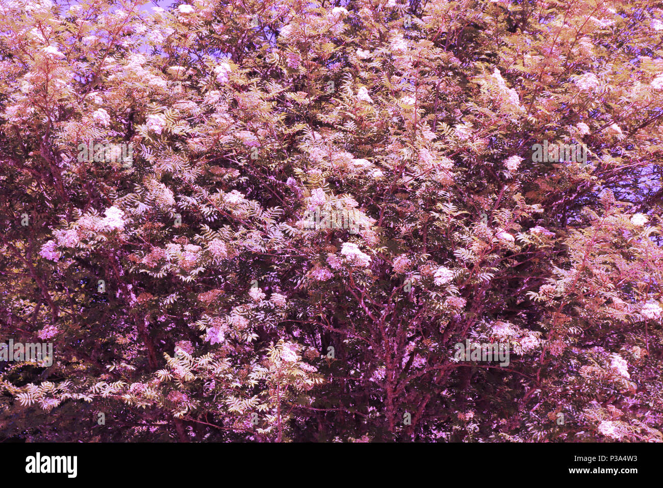 Abstract background, wallpaper, graphic resource - Stock Image