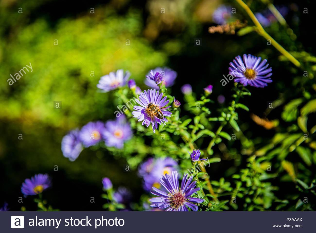 Spring flowers with bees in a beautiful garden stock photo spring flowers with bees in a beautiful garden mightylinksfo