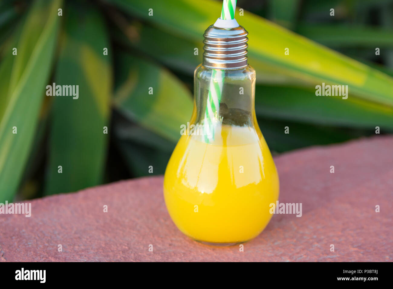 Bottle Palm Trees Stock Photos Bottle Palm Trees Stock Images