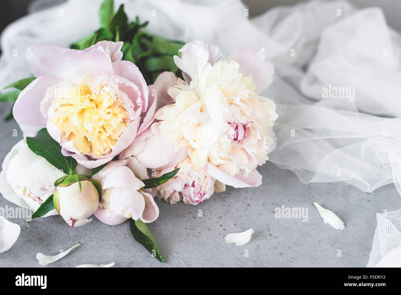 Pink White Pastel Peony Flowers On Grey Concrete Background. Wedding ...