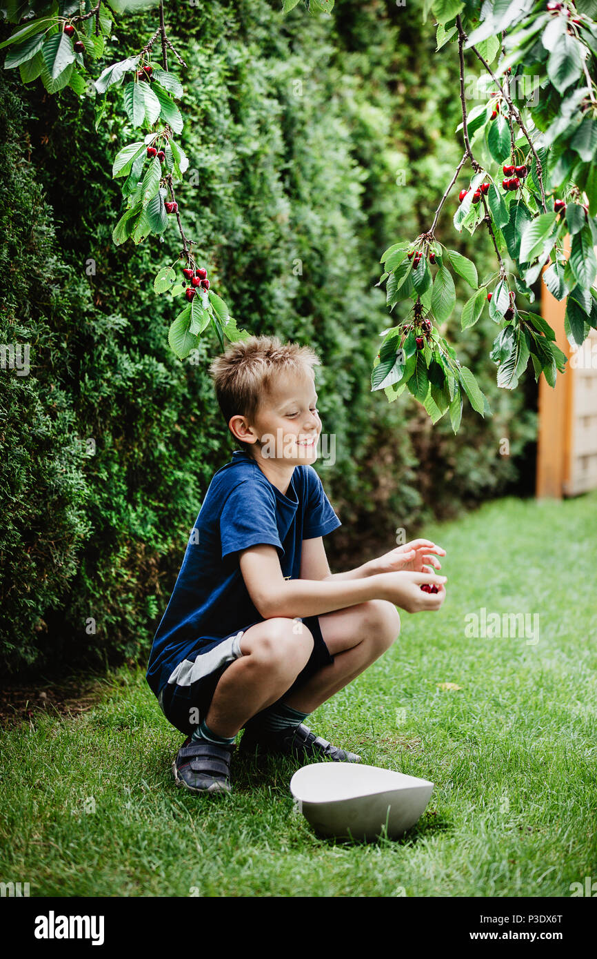 Young boy 7-9 years old picking red ripe cherries direct from the cherry tree in the garden. Green background, vertical shot. - Stock Image