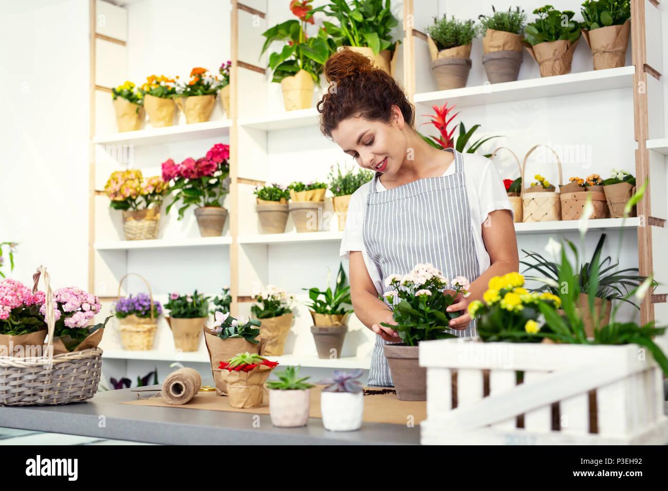 Joyful nice florist looking at the plant - Stock Image