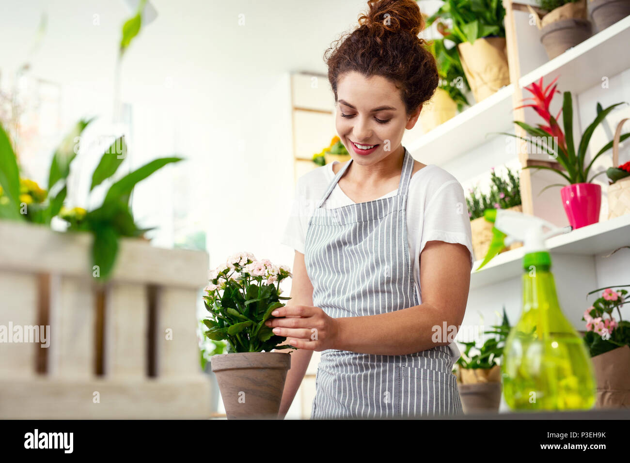 Delighted cheerful woman caring about the flower - Stock Image