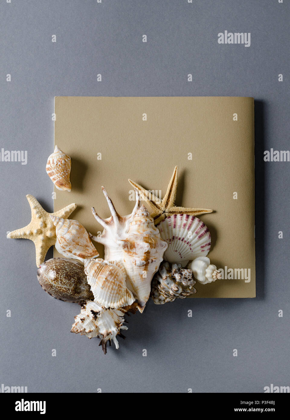 Collection of seashells with empty greeting card on a grey backdrop. Vacation summer flat lay Template. - Stock Image