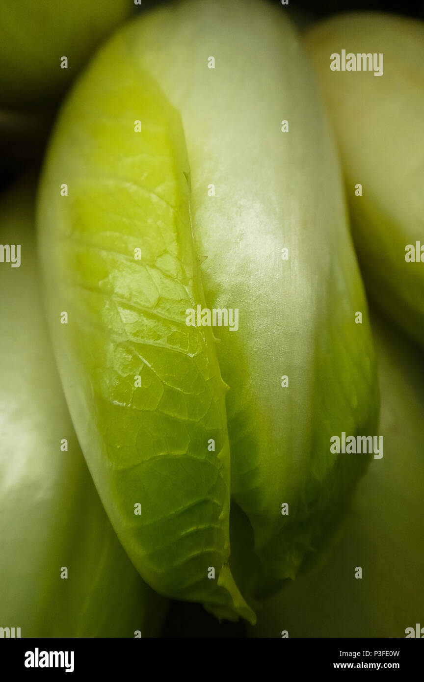 Closeup of fresh and crisp Belgian endive at the Farmer's Market Stock Photo