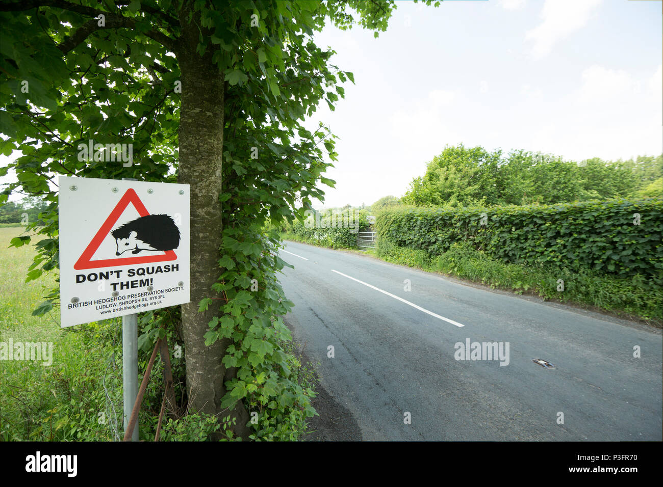 A sign asking motorists to look out for hedgehogs crossing roads near Sedbergh in Cumbria England UK GB. Hedgehogs are killed on roads and overall the - Stock Image