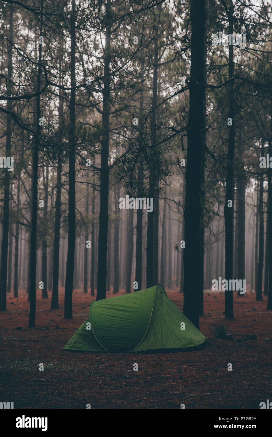 Grünes Zelt im Wald, wandern campen im Sommer Abenteuer - Stock Image